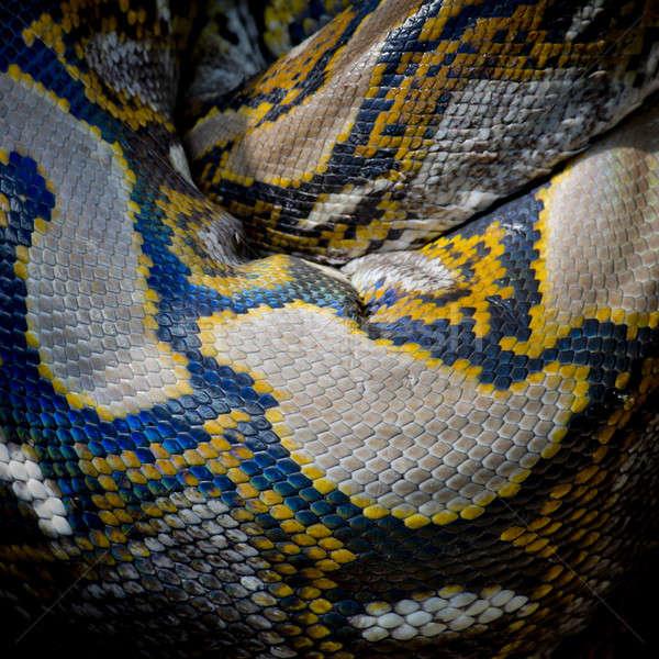 Foto python iso isoliert schwarz Stock foto © art9858