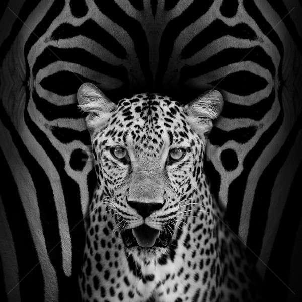 Leopar portre yüz kedi park hayvan Stok fotoğraf © art9858