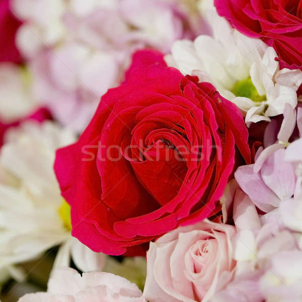 Colorful fower background - natural texture of love - Red and Pi Stock photo © art9858