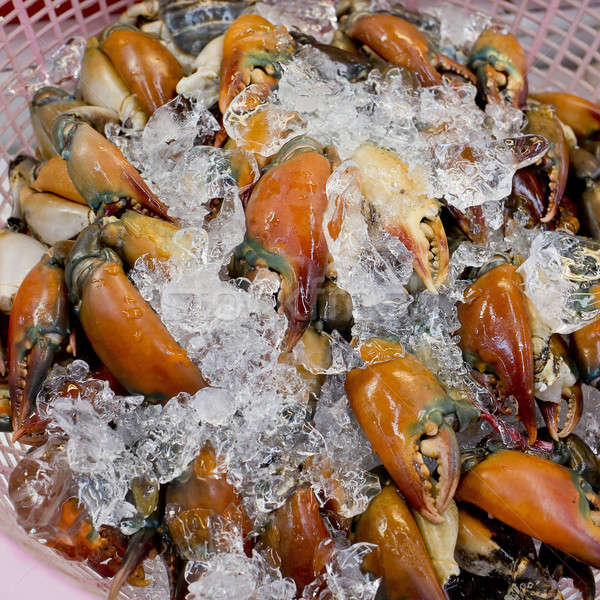 stone crab claws on a ice in Thailand market Stock photo © art9858