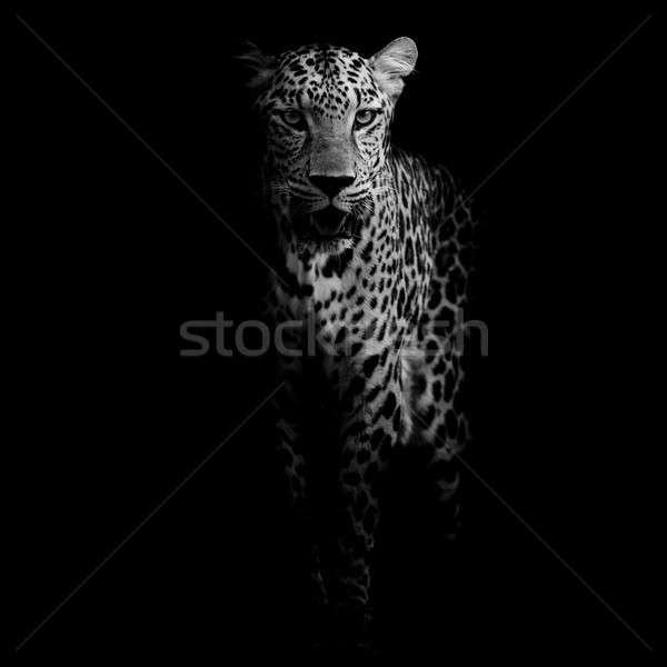 Leopar portre ağaç kedi ağız Stok fotoğraf © art9858