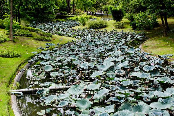 Lotus and waterlilly garden Stock photo © art9858