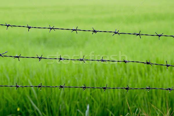Drutu kolczastego ryżu tekstury bezpieczeństwa wojny Zdjęcia stock © art9858