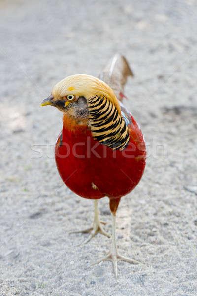 Beautiful bird Stock photo © art9858