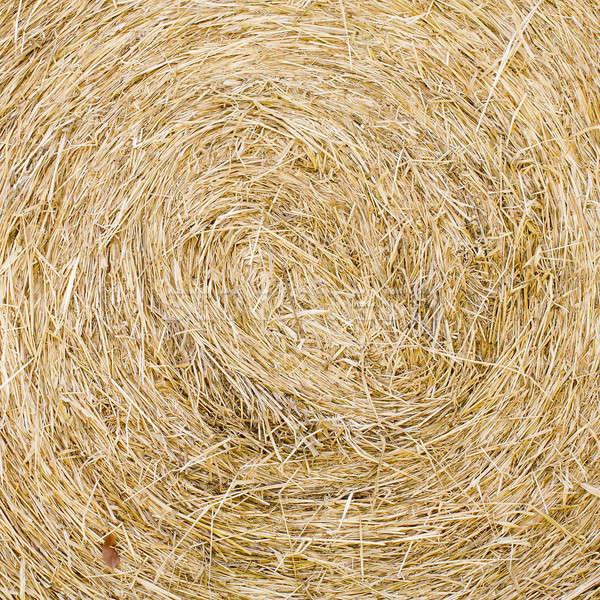 Straw texture background, close up Stock photo © art9858