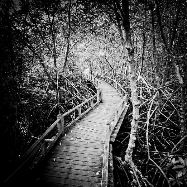 Stock photo: walk way to Mangrove forest-black and white