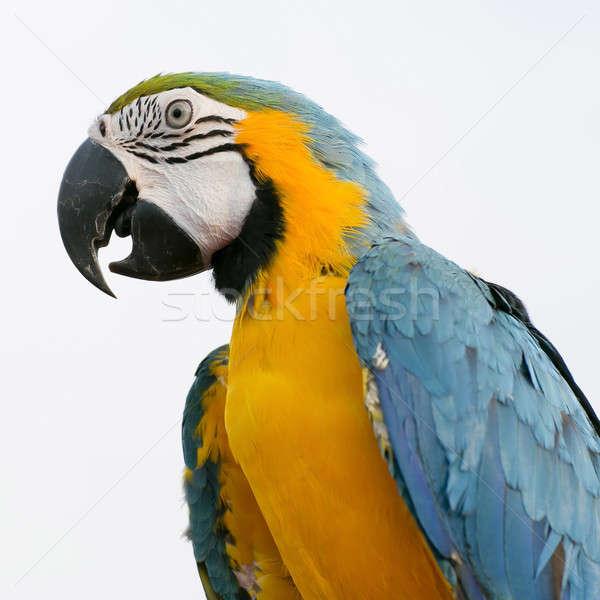 Vogel planten dier tak heldere kleurrijk Stockfoto © art9858