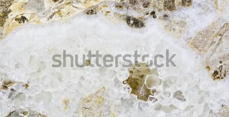 Koud groene kokosnoten ijs tank klaar Stockfoto © art9858
