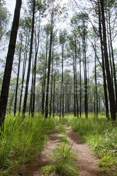 Aydınlatma ağaç iz bahar çim yol Stok fotoğraf © art9858