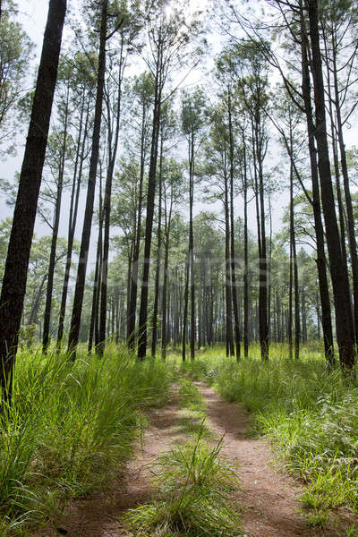 Lighting Tree Trail Stock photo © art9858