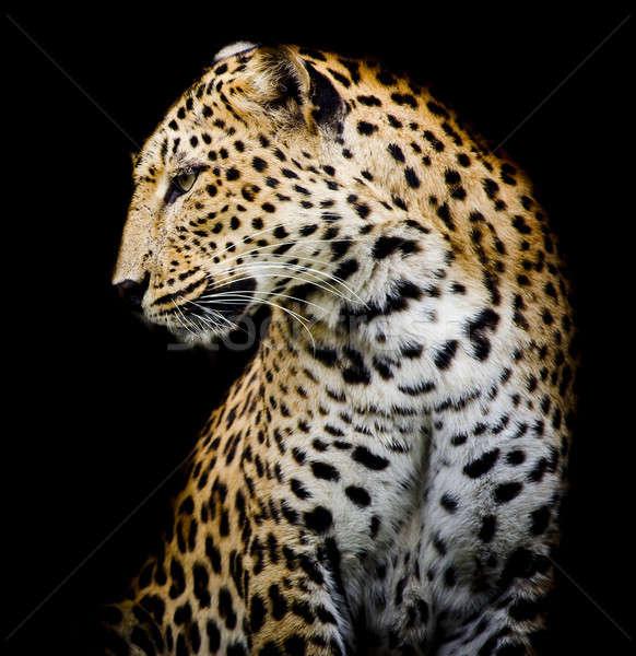 side of Leopard Stock photo © art9858