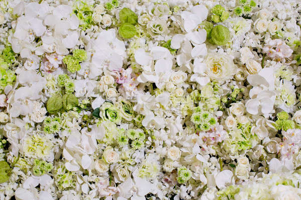 white flowers background texture. Stock photo © art9858