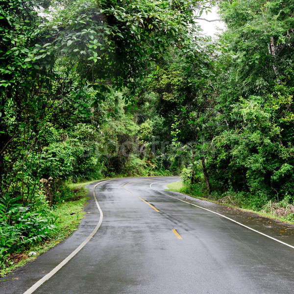 Winding Road Through a Forest Stock photo © art9858