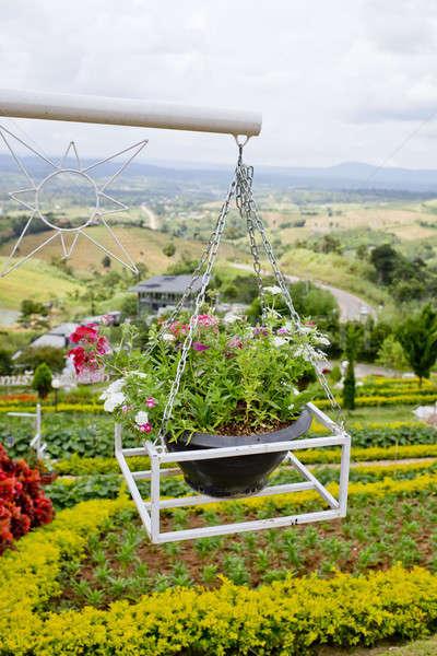 Belo flor enforcamento cesta edifício parede Foto stock © art9858