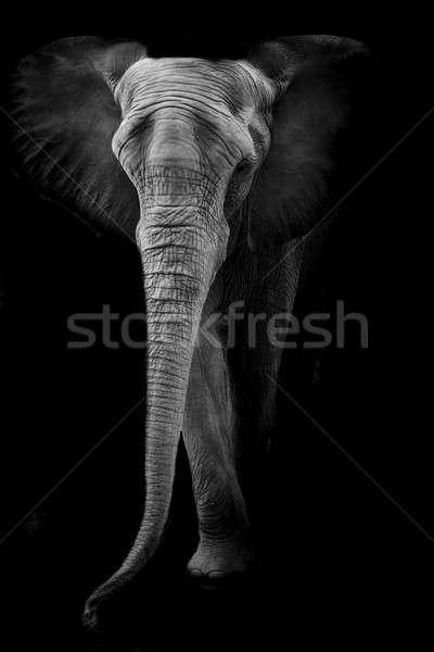 象 眼 肖像 黒 皮膚 耳 ストックフォト © art9858
