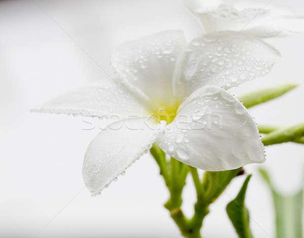 Dew drops close up Stock photo © art9858