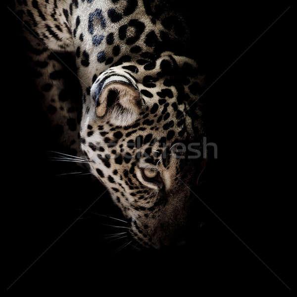 Jaguar портрет глаза природы фон тигр Сток-фото © art9858