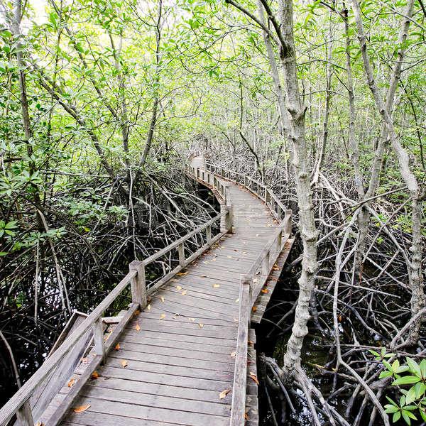 Lopen manier bos water hout natuur Stockfoto © art9858