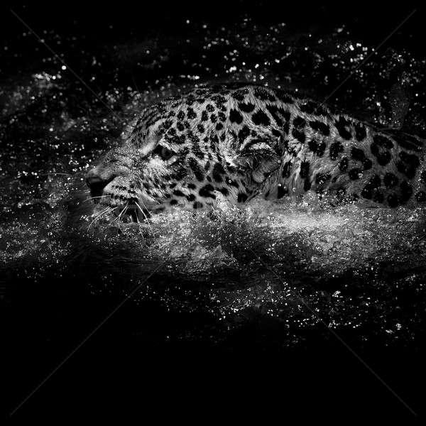 Jaguar  swim Stock photo © art9858