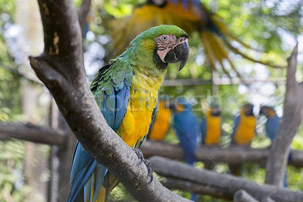 美しい ペット オウム 鳥 翼 黄色 ストックフォト © art9858