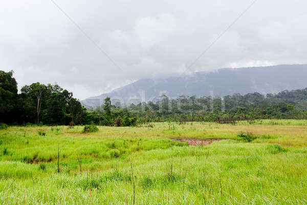 sparse forest Stock photo © art9858