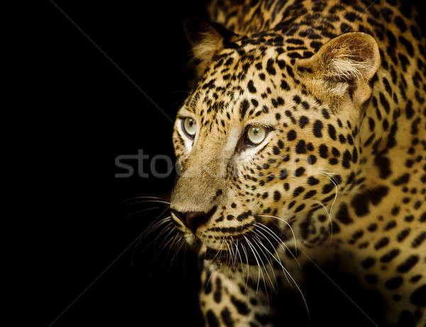 Leopard портрет лице кошки тигр парка Сток-фото © art9858