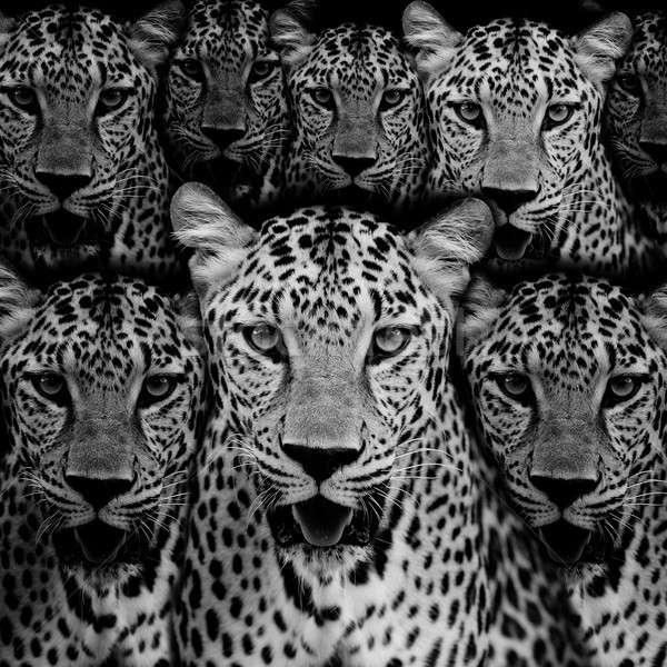 Leopardo retrato cara gato parque animales Foto stock © art9858