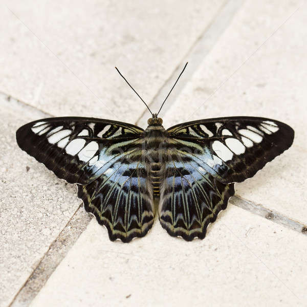 Close up Butterfly Stock photo © art9858