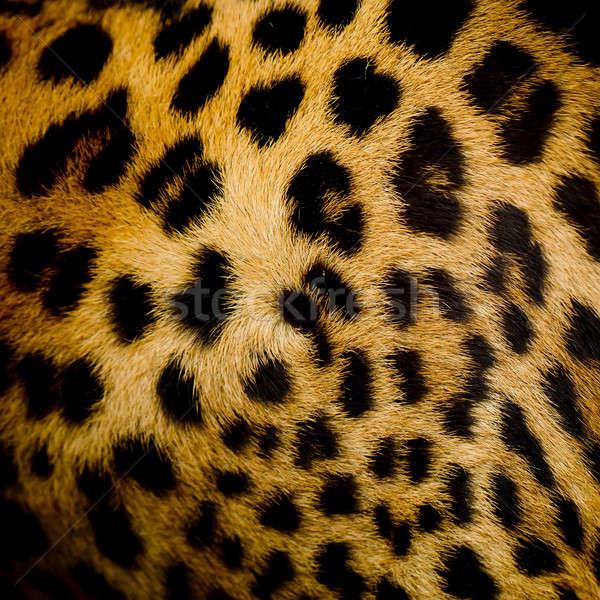 Leopar kürk doku moda doğa kedi Stok fotoğraf © art9858