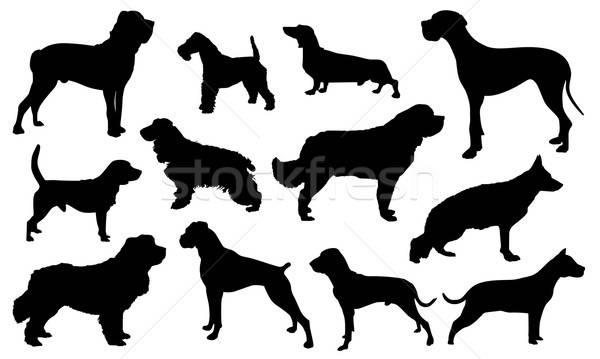 Köpek siluet doğa dizayn arka plan imzalamak Stok fotoğraf © artag