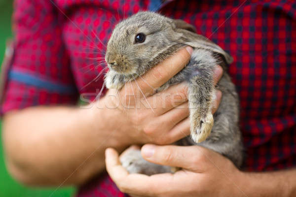 Rabbit. Animals and people Stock photo © artfotodima