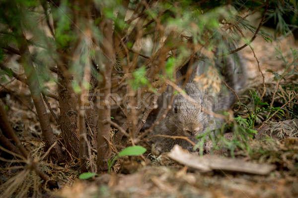 кролик красивой животного природы Cute Пасху Сток-фото © artfotodima
