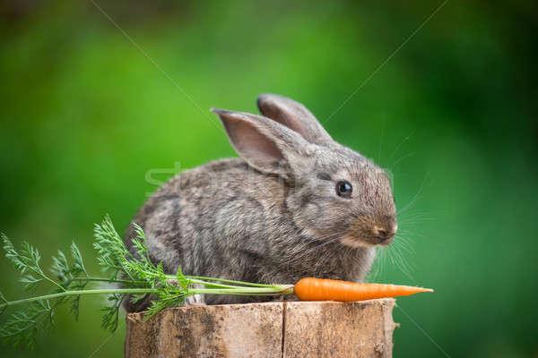 Rabbit. Beautiful animal of nature Stock photo © artfotodima
