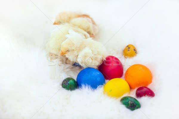 Baby kip ester eieren witte bont Stockfoto © artfotodima