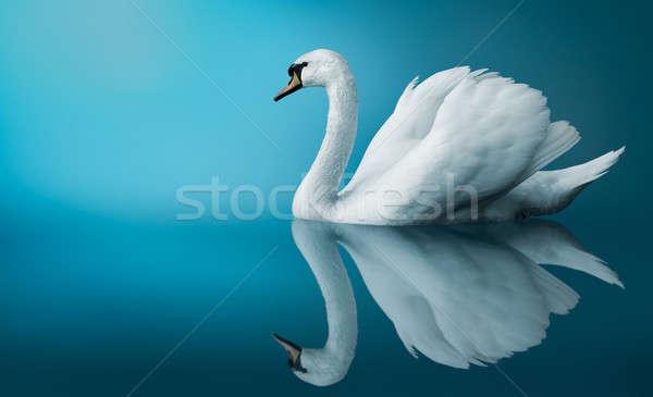 Cisne fantástico azul espacio de la copia digital hermosa Foto stock © artfotodima