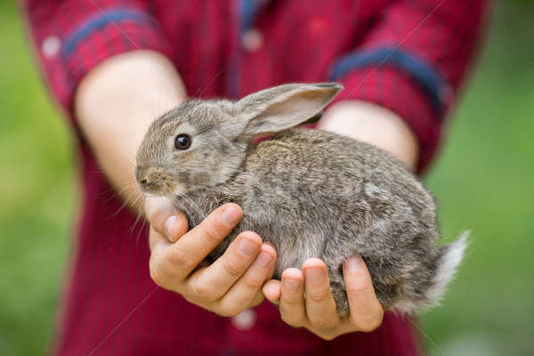 Rabbit. Animal in man hands Stock photo © artfotodima