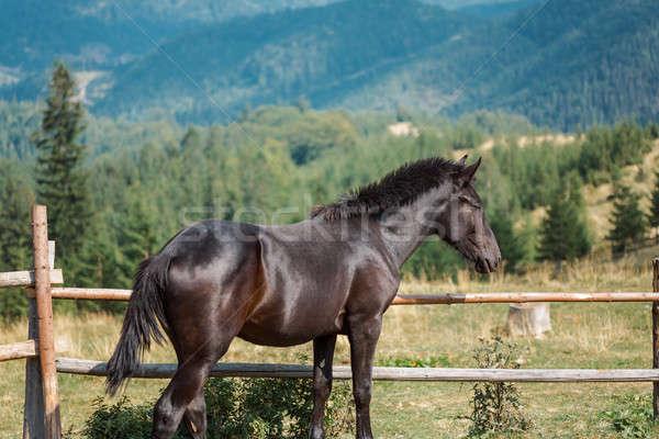 лошадей природы резерв местный фермы Сток-фото © artfotodima