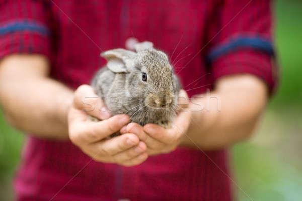 Rabbit. Animal in man hands Stock photo © artfotodima