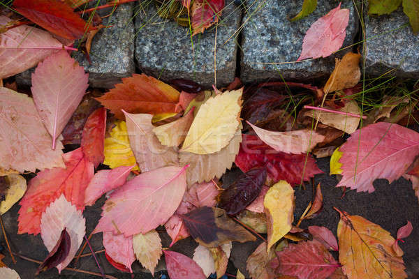 Fallen autumn leaves with water drops Stock photo © artfotodima