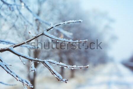 Fagyos faág tél út égbolt fa Stock fotó © artfotodima