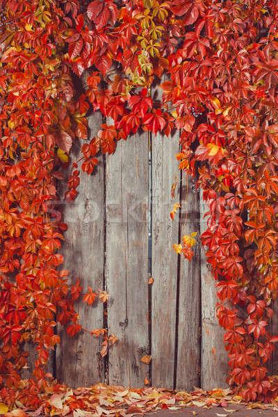 осень аннотация кадр забор листьев Сток-фото © artfotodima