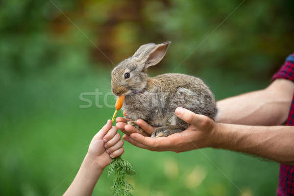 Rabbit. Feeding animal  Stock photo © artfotodima