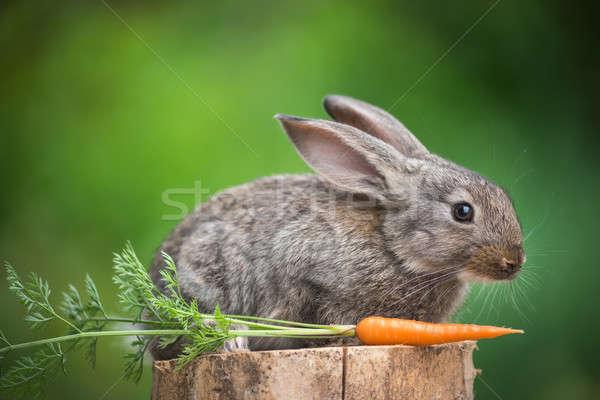 Rabbit. Beautiful animal of wild nature Stock photo © artfotodima