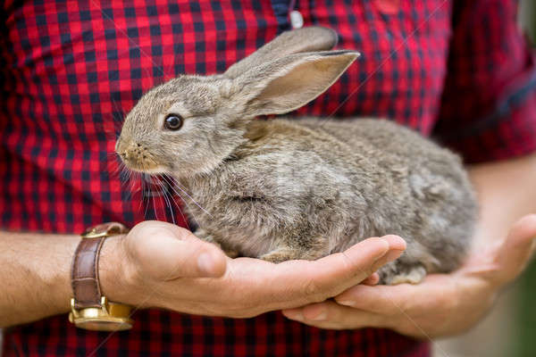Rabbit. Animals and people Stock photo © artfotodima