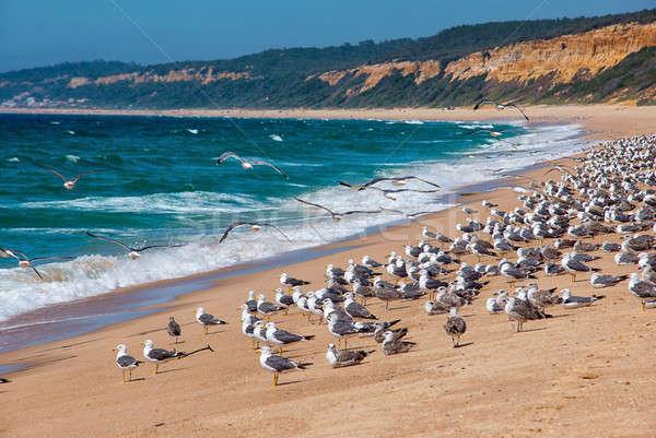 Brzegu plaży Portugalia mewy Zdjęcia stock © artfotoss