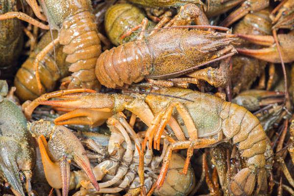 Many live crayfish on kitchen Stock photo © artfotoss