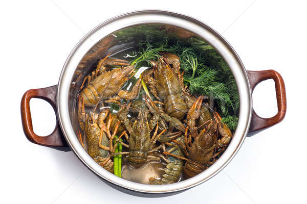 Fresh crayfish in a pot Stock photo © artfotoss