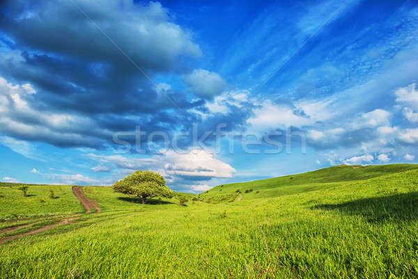Verano paisaje poco árboles herboso ladera Foto stock © artfotoss