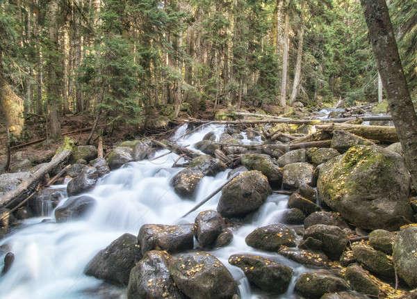 Folyó észak Kaukázus Oroszország fa természet Stock fotó © artfotoss