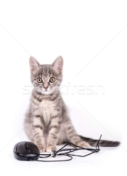beautiful small kitten plays with the computer mouse Stock photo © artfotoss